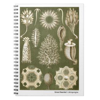 Ernst Haeckel Notebooks & Journals.