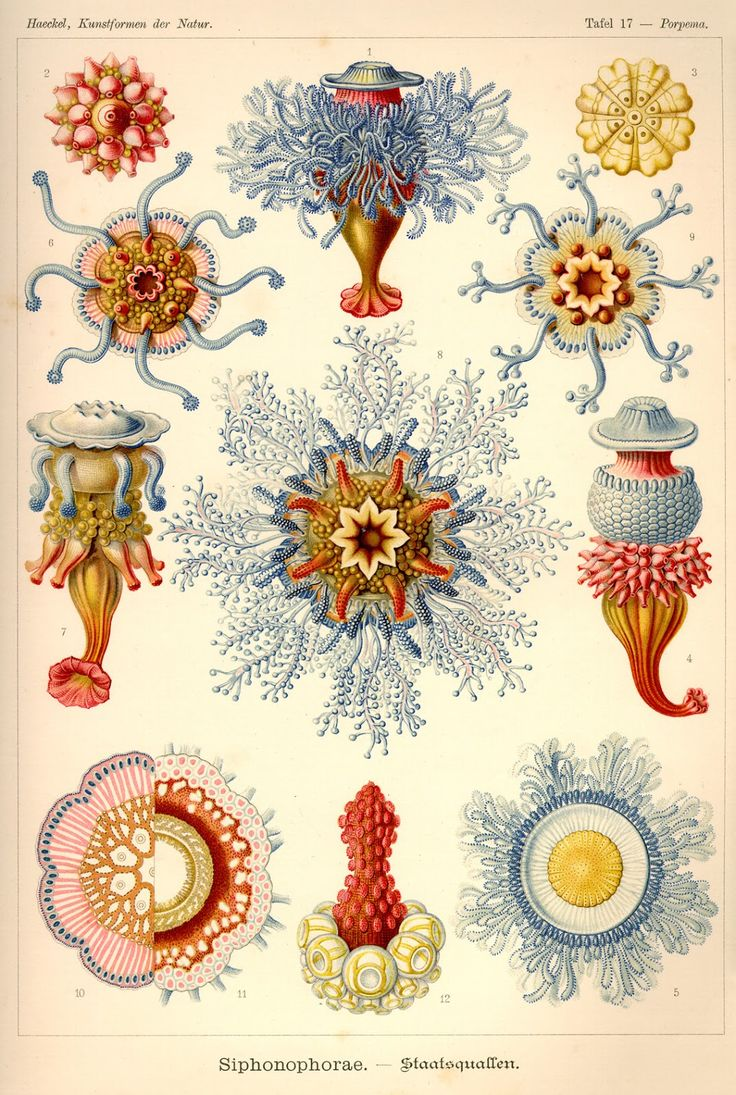 169 best ideas about The Work of ERNST HAECKEL 1834.