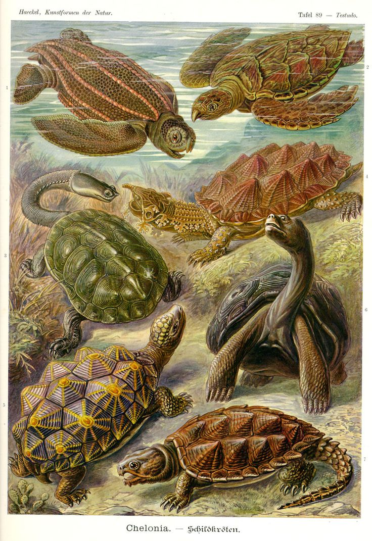 17 Best images about Ernst Haeckel Illustrations on Pinterest.