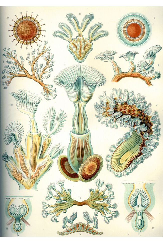 17 Best images about Ernst Haeckel on Pinterest.