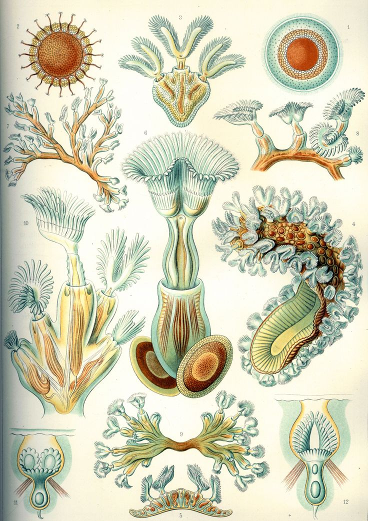 1000+ images about Ernst Haeckel on Pinterest.