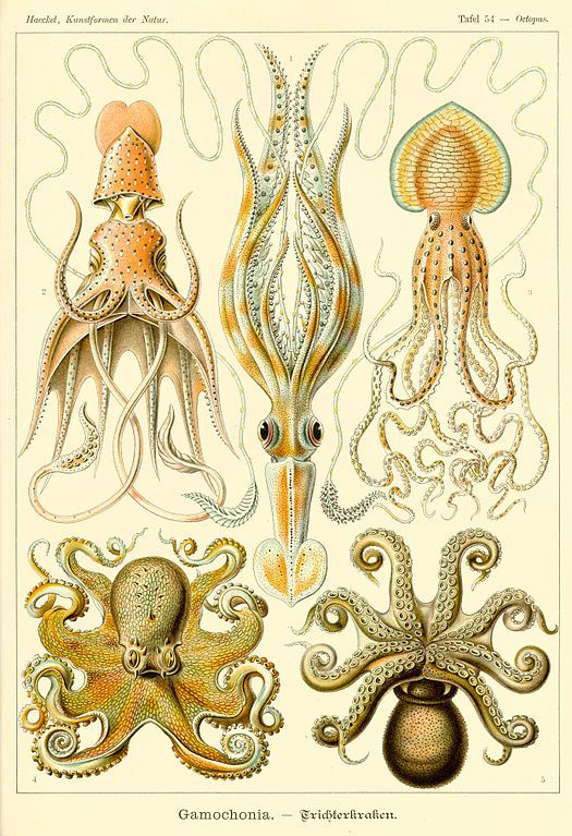 Ernst Haeckel's Art Forms of Nature.