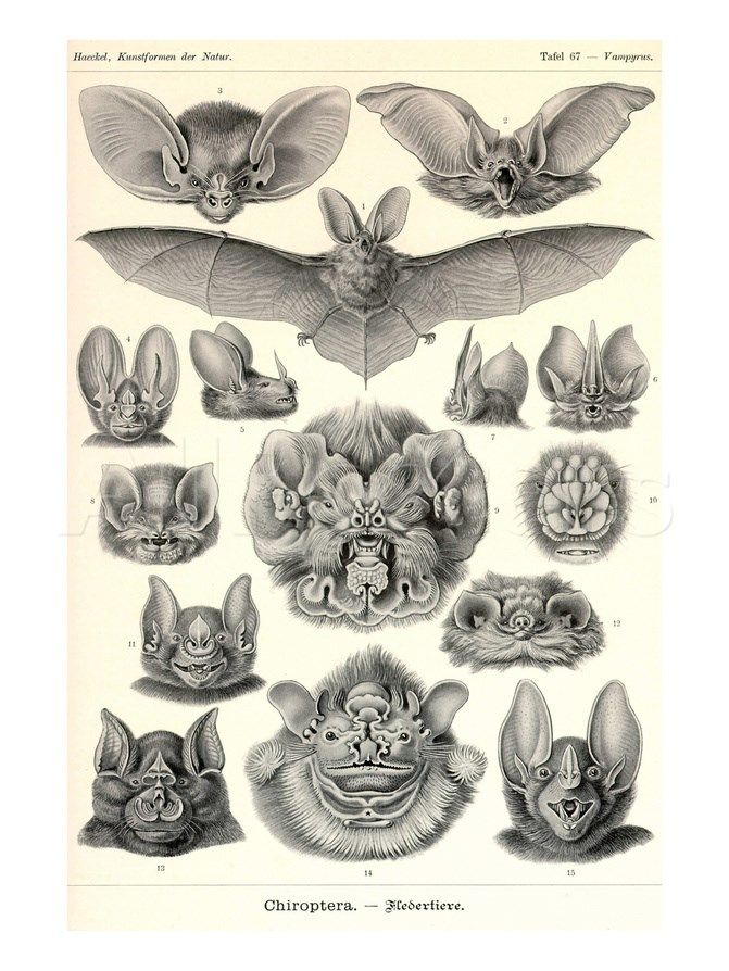 17 Best ideas about Ernst Haeckel Art on Pinterest.