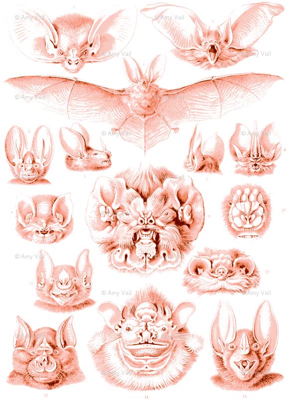 Fledermaus Toile wallpaper.