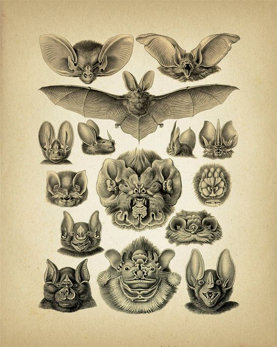 Bats Collage by Haeckel.