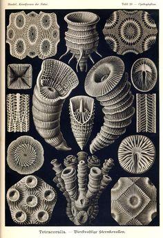Ernst haeckel and Art on Pinterest.