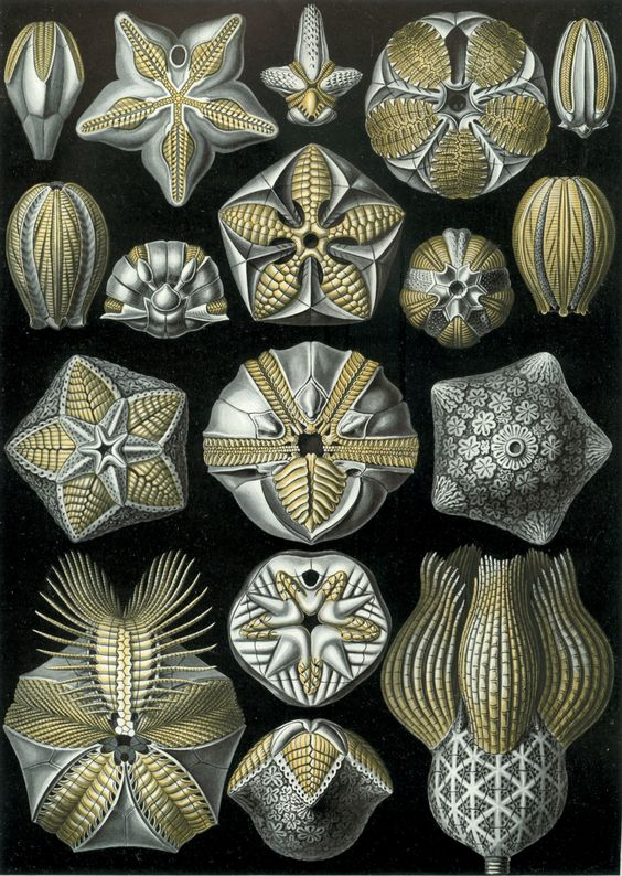 Beautiful, Search and Ernst haeckel on Pinterest.