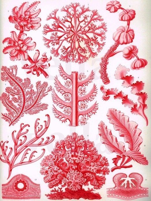 ocean jungle 100 year old sea life red flora plants zoology Book.