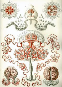 1000+ images about Ernst Haeckel :: The Scientist as Artist on.