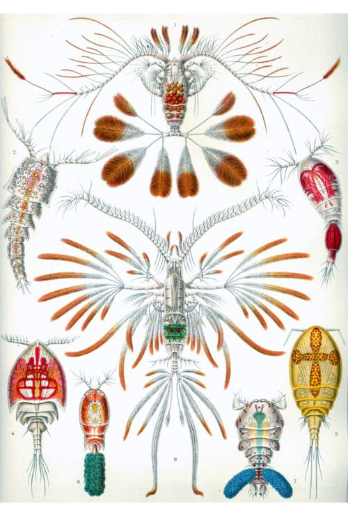 1000+ images about Style board: Ernst Haeckel on Pinterest.