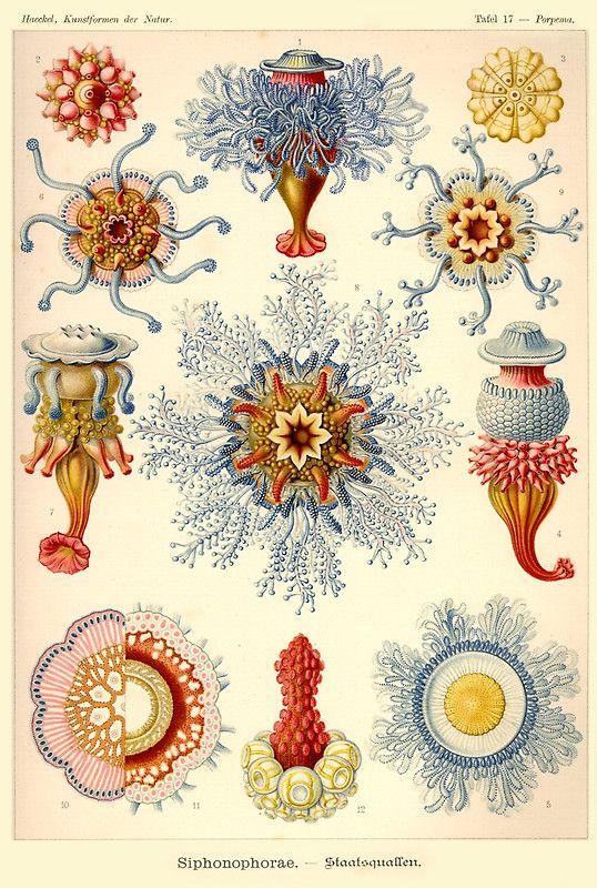 1000+ ideas about Ernst Haeckel on Pinterest.