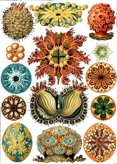 haeckel prints.