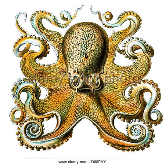 Haeckel Art Stock Photos & Haeckel Art Stock Images.