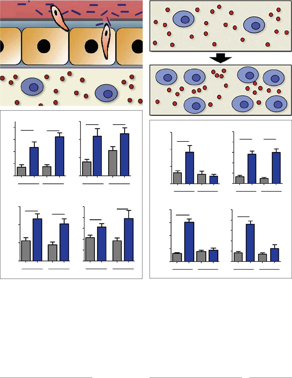 The Role of Hemocytes in Anopheles gambiae Antiplasmodial Immunity.