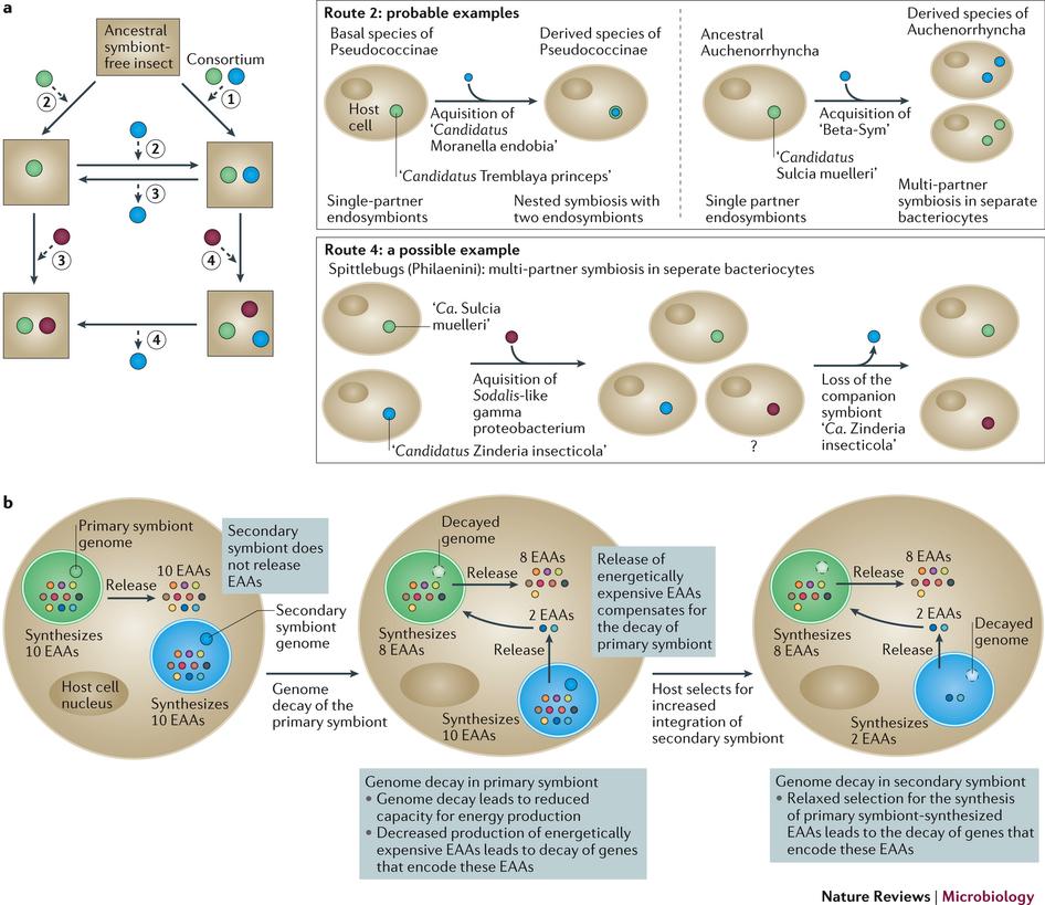 Evolutionary dynamics of multi.