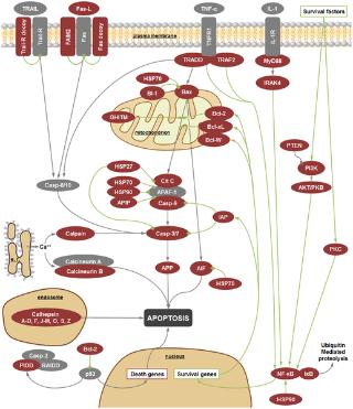 Transcriptomics of In Vitro Immune.