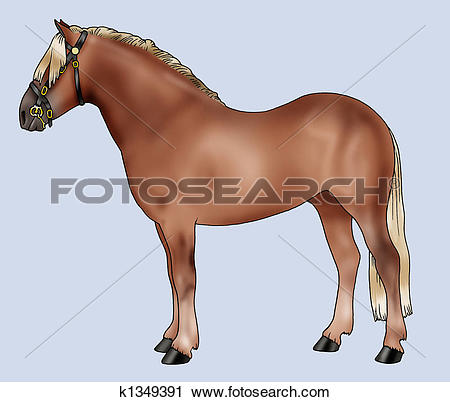 Clipart of Pony breeds: Haflinger k1349391.