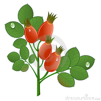 Cute Bunny Holding Carrot. Vector Stock Photos.
