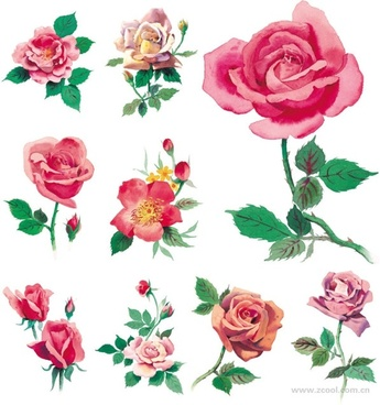 Rose free stock photos download (1,929 Free stock photos) for.