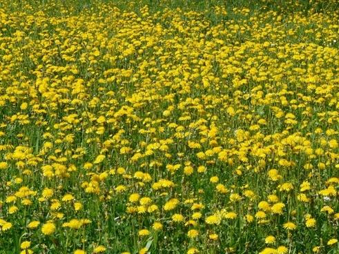 Border design yellow free stock photos download (4,561 files) for.