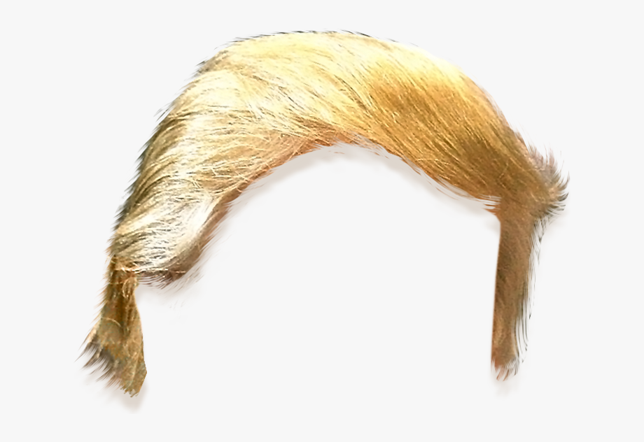Hair Hairstyle United Trump States Template Clipart.