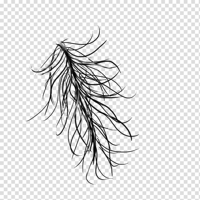 Windy rainy hair, black feather illustration transparent.