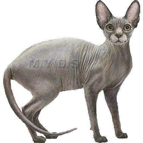 Sphynx, Canadian Hairless clipart graphics (Free clip art.