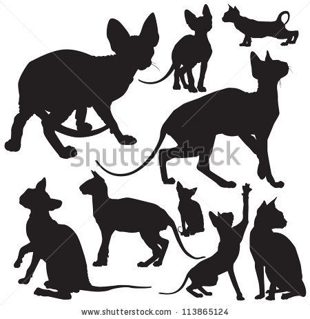 hairless cat silhouette. black. outline. drawing. cats.