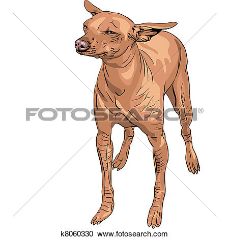 Clipart of vector Mexican Hairless Dog Xoloitzcuintle breed.