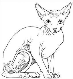 Hairless cat clipart.
