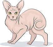 Clip Art of Sphynx Cat k15738187.