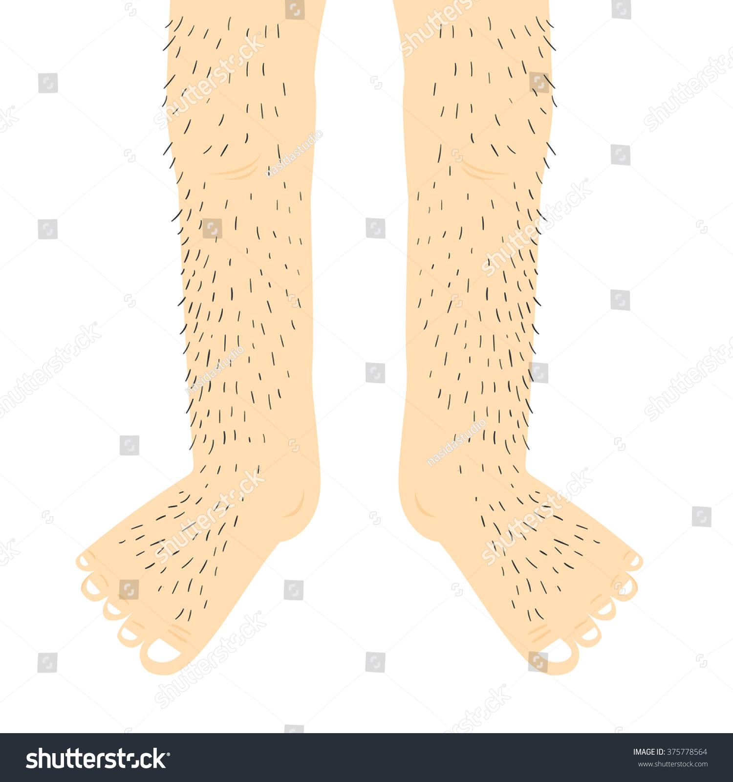 Hairy legs.Vector Illustration. Stock Photo 375778564.