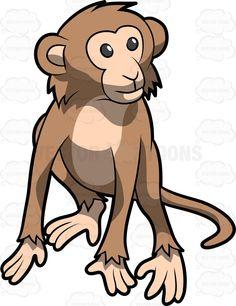 A Walking Cute Monkey.