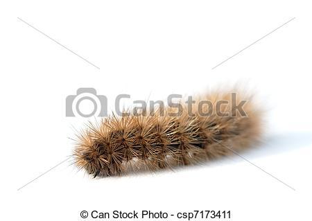 Stock Photography of Hairy caterpillar.