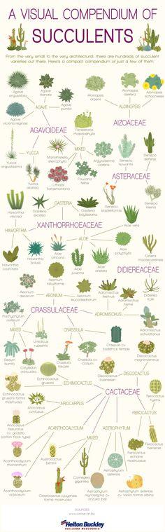 23 Diagrams That Make Gardening So Much Easier.