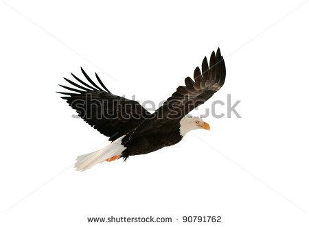 Female High Soring Eagle Logo Clipart.