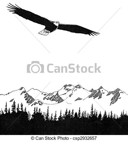 Stock Illustrations of Bald Eagle.