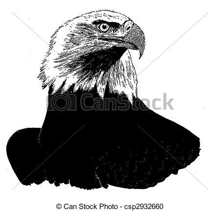 Stock Illustration of Bald Eagle.