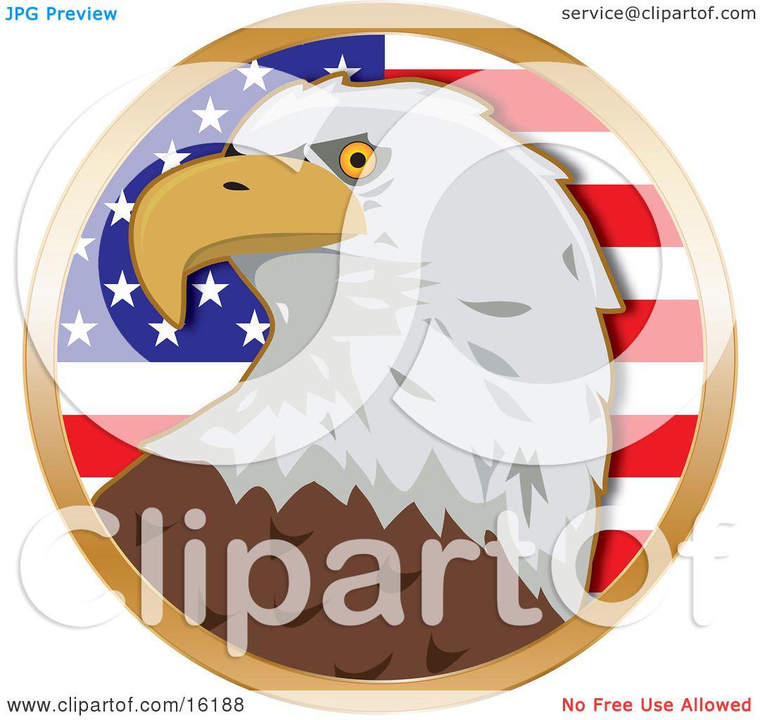 American Bald Eagle (Haliaeetus Leucocephalus) In Front Of The.