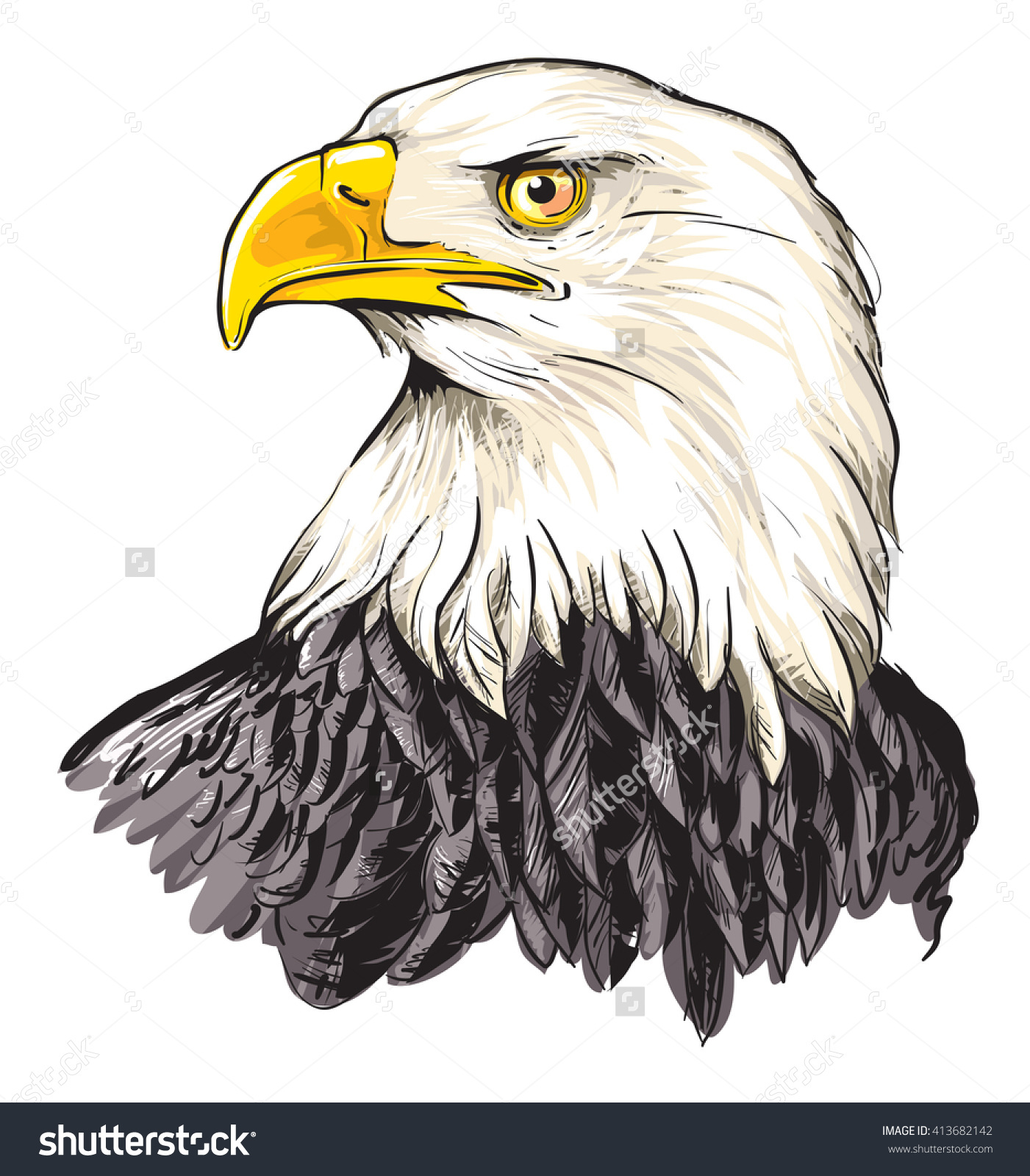 Bald Eagle Haliaeetus Leucocephalus Stock Vector 413682142.