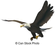Bald eagle Stock Photo Images. 7,371 Bald eagle royalty free.