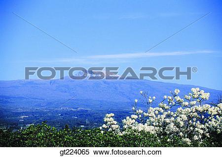 Stock Image of Korea, Cheju Island, Cheju, Halla mountain, halla.