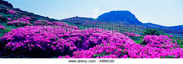 Halla Korea Stock Photos & Halla Korea Stock Images.