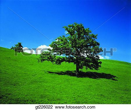 Stock Photo of Cheju Island, Cheju, Halla mountain, halla mountain.