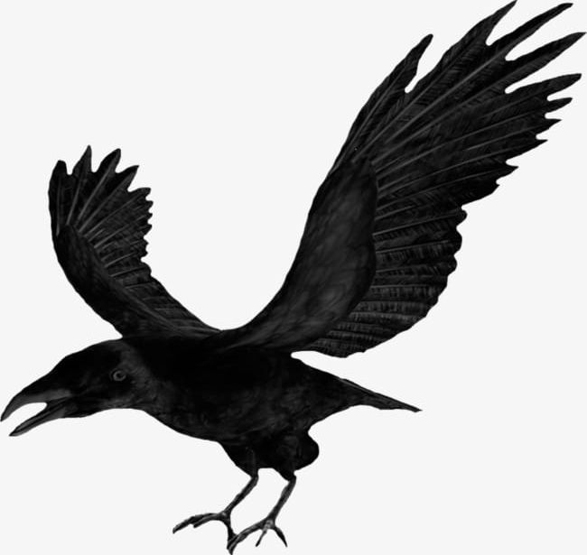 Halloween Crow Wings PNG, Clipart, Black, Crow, Crow Clipart.