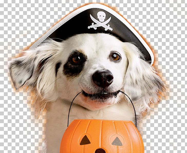 Dog Puppy Halloween Pet Costume PNG, Clipart, Animals, Bone.