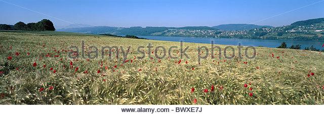 Aarau Stock Photos & Aarau Stock Images.