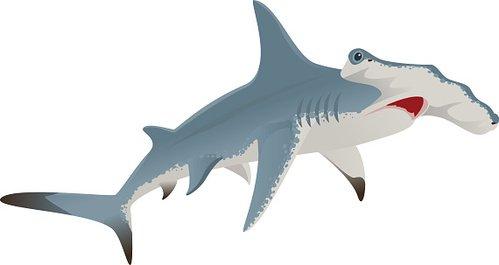 Big hammerhead shark Clipart Image.