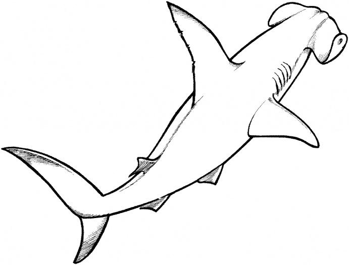 Free Cartoon Hammerhead Shark, Download Free Clip Art, Free.