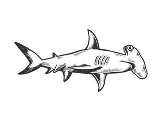 Hammerhead Shark Clipart photos, royalty.